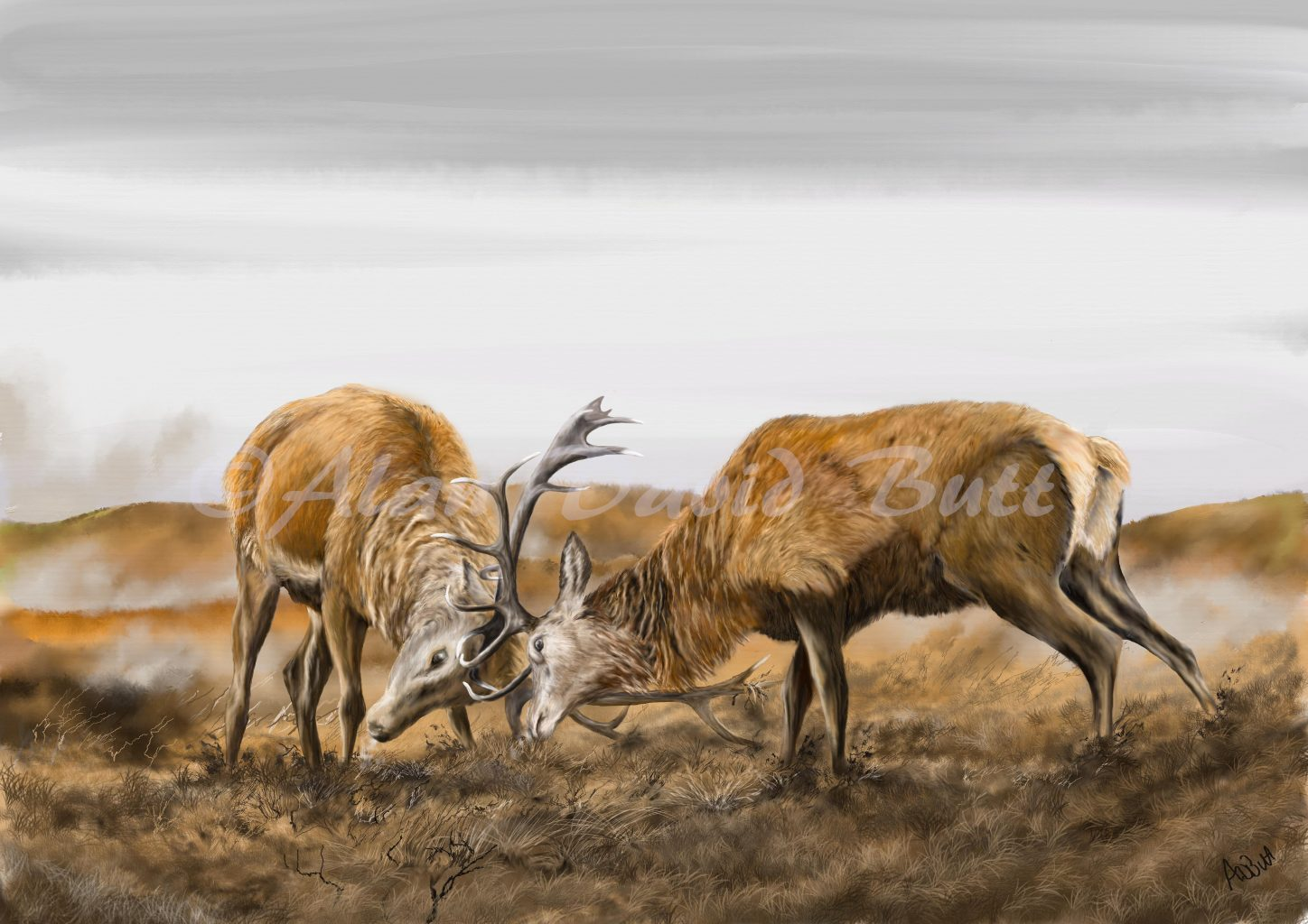 Two stags rutting